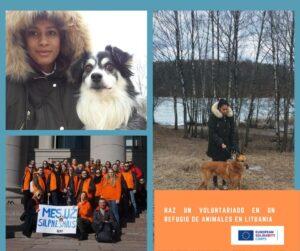 Voluntariado Refugio animales