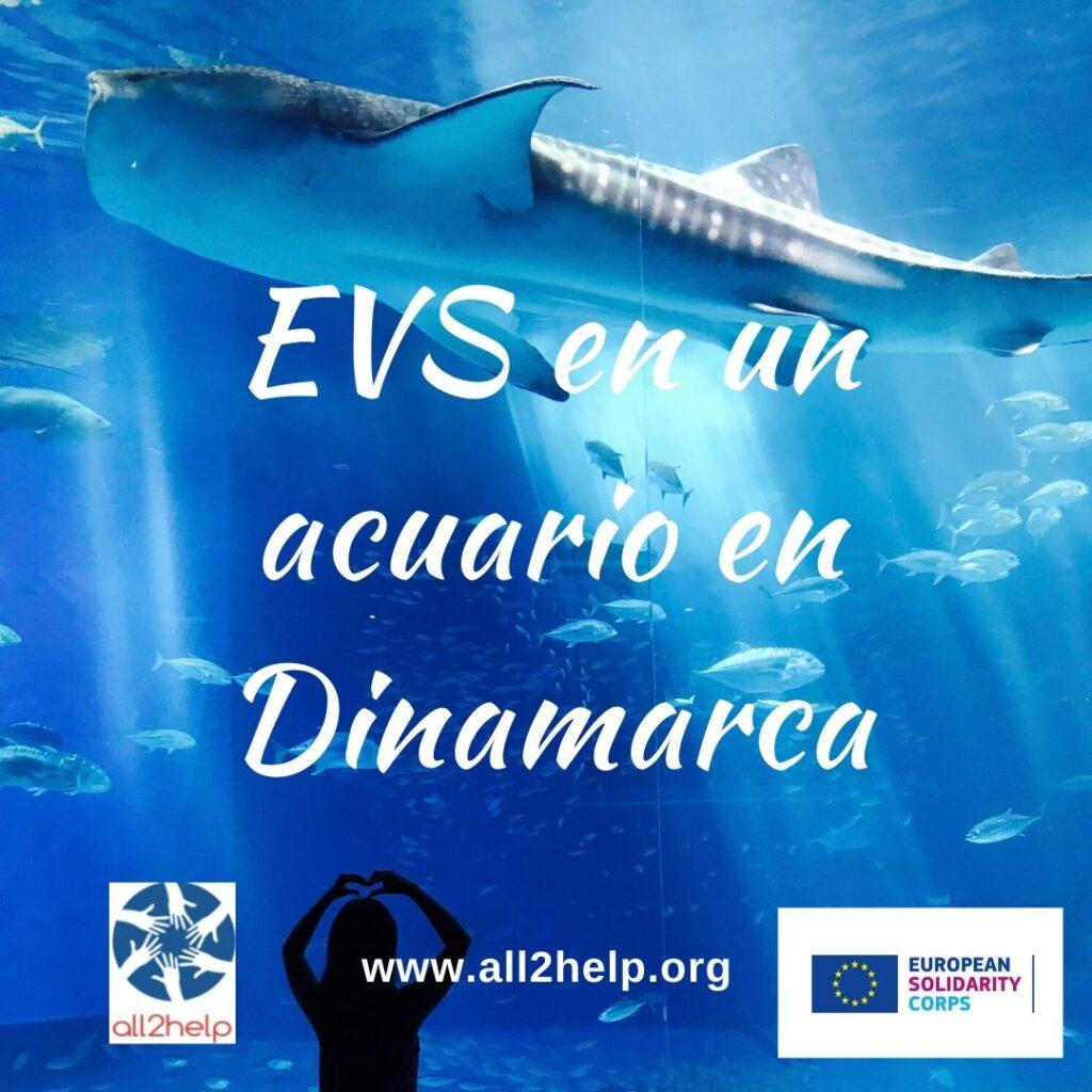 Voluntariado EVS Acuario